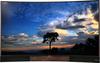 TCL U55H8800CDS tv